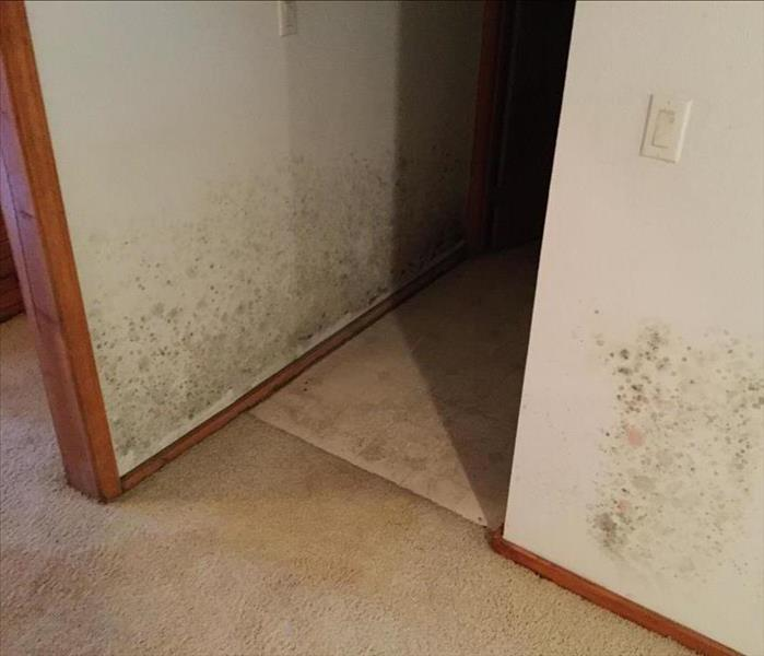 Mold Infestation in Springfield Before