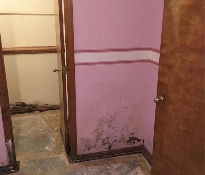 Mold Infested Basement Bedroom, Springfield, MO