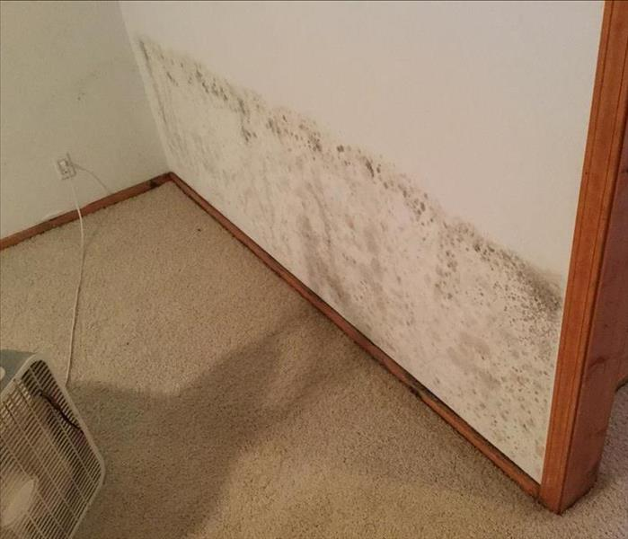 Mold Infested Home in Springfield