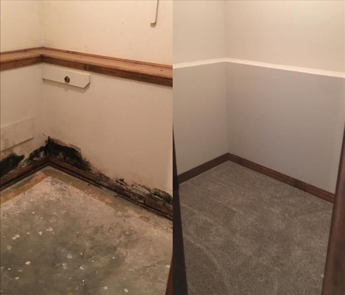 Mold Infested Closet Springfield, MO