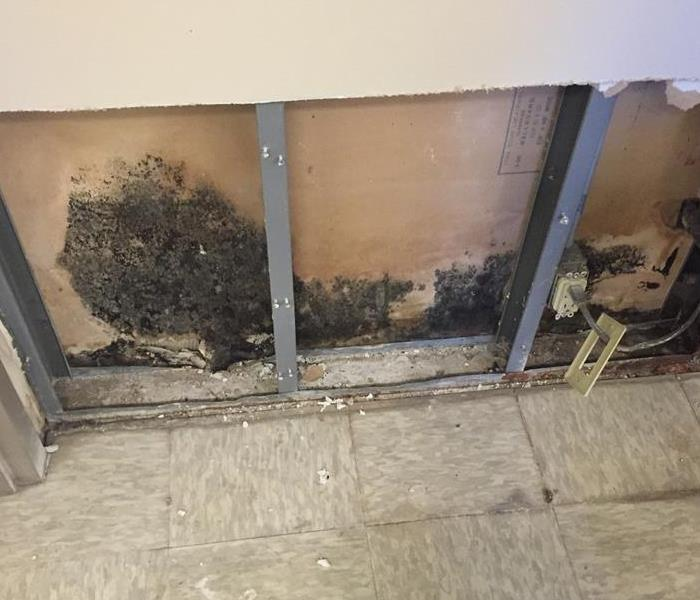 Mold Remediation Does Your Springfield Home Have A Mold Problem?
