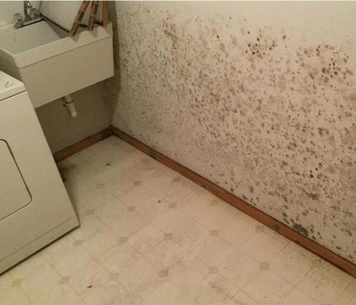 Mold Remediation Springfield and Greene County Residents: Follow These Mold Safety Tips If You Suspect Mold